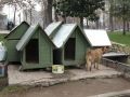 Dog Kennels in Santiago Park